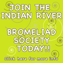 Join the Indian River Bromeliad Society Today!!